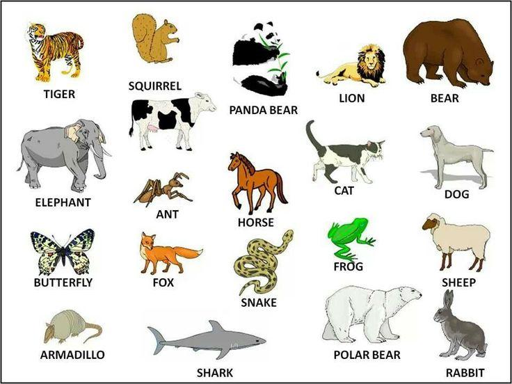 animais-em-ingles-lista-exclusiva-estudar-ingles-online-2018